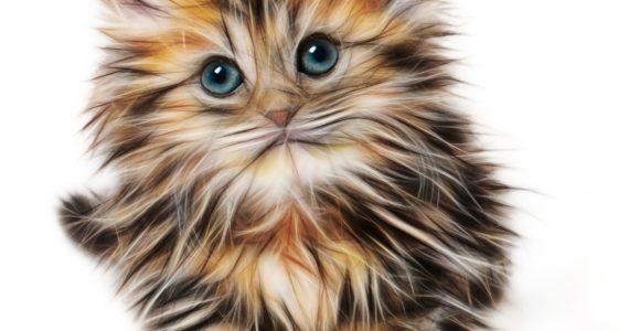 Стрижка кошек в Мытищах